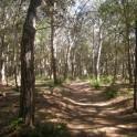 Rimigliano Naturpark