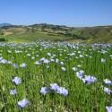 Die herrliche Naturlandschaft in der Umgebung von San Casciano dei Bagni