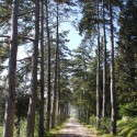 das private Waldstück mit Spazierweg