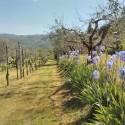 idyllische Umgebung mit Olivenhain, Weinanbau und bewaldeten Hügeln