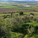 Ausblick über die Landschaft der Maremma