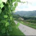 Toskana Weingut - Landhaus Campo Antico