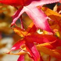 Farbenpracht im Oktober