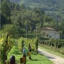 Weingut Il Salicone - die Weinlese beginnt