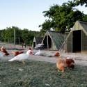 Forte Sorgnano - die hauseigenen Hühner