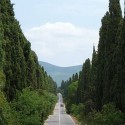 Die berühmte Cypressenallee von Bolgheri