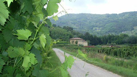 Weingut Campo Antico in Serravalle Pistoiese