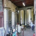 Weinproduktion Weingut Il Salicone - Campo Antico