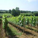 Weingut Il Salicone-Campo Antico in Serravalle Pistoiese, Provinz Pistoia