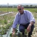 Der Chef im Erdbeerfeld