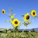 Sommer-Sonnen-Grüsse