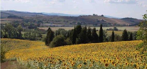 Herrliche Naturlandschaft in der Region um Buonconvento