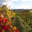 Weinanbaugebiet in der Region um Chiusi