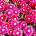 Blumenpracht im Mai