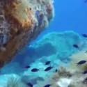 Die bunte Unterwasserwelt des Monte Argentario