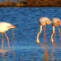 Das Naturschutzgebiet Duna Feniglia