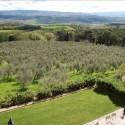 Aublick auf Olivenhaine und Wälder