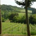 Ausblick auf Weinhänge