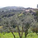 Toskanische Frühlingslandschaft